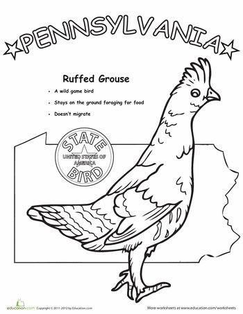 157 best State Birds images on Pinterest  Free printable coloring