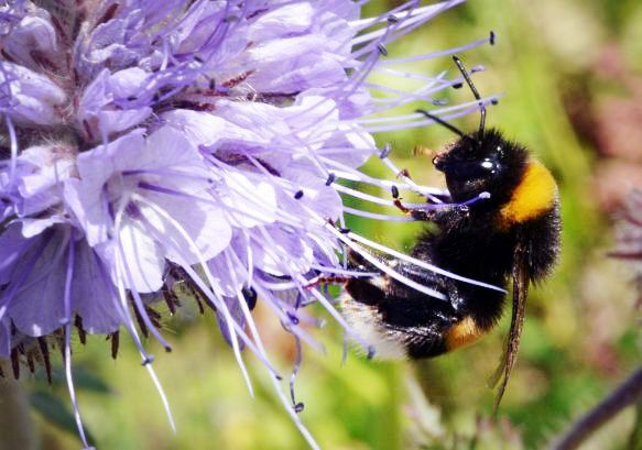 Your Bee-Friendly Garden May Be Killing Bees—and Here's What to Do About It | TakePart