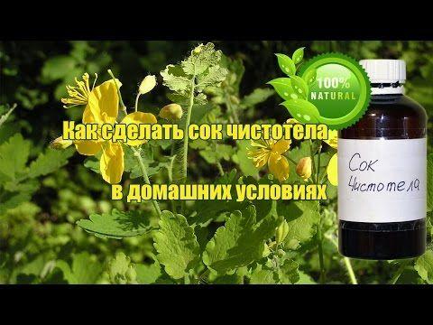 Приготовление сока травы чистотела, как получить сок чистотела в домашних…