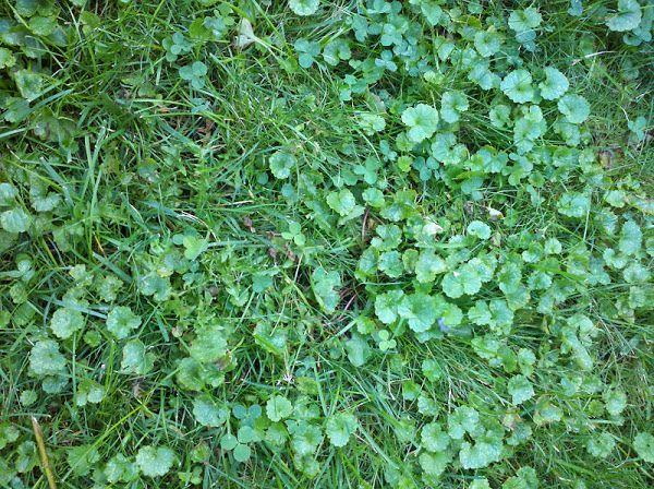 12 Best Organic Lawn Amp Garden Tips Amp Tricks Images On