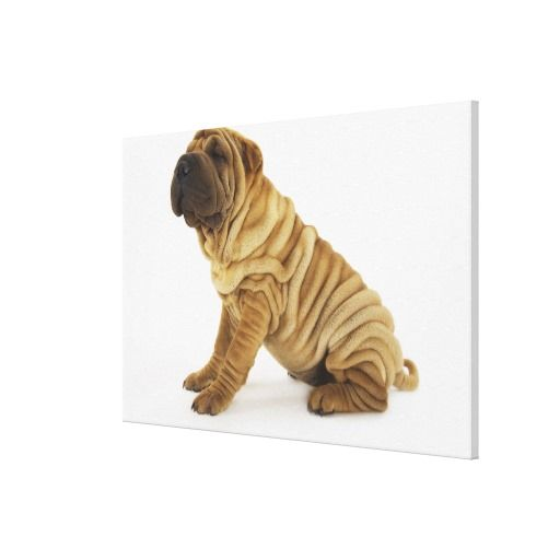@@@Karri Best price          	Shar-pei Canvas Prints           	Shar-pei Canvas Prints so please read the important details before your purchasing anyway here is the best buyDiscount Deals          	Shar-pei Canvas Prints today easy to Shops & Purchase Online - transferred directly secure and truste...Cleck Hot Deals >>> http://www.zazzle.com/shar_pei_canvas_prints-192344629397858624?rf=238627982471231924&zbar=1&tc=terrest