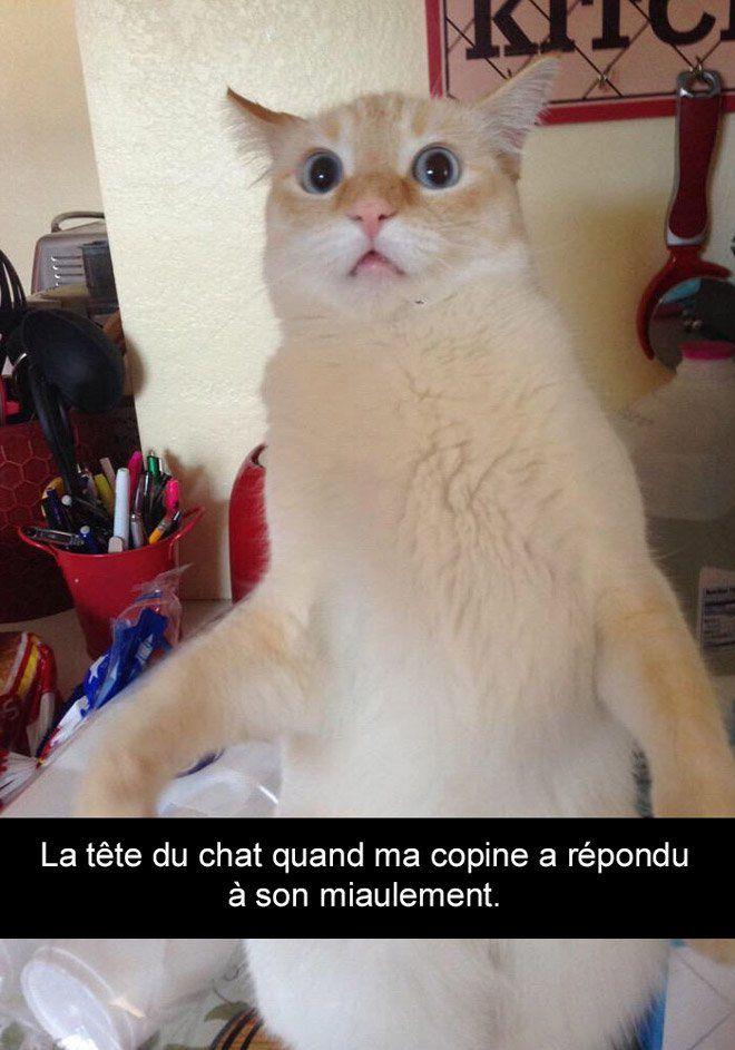 http://www.demotivateur.fr/article/20-snapchat-de-chats-qui-vont-vous-faire-mourir-de-rire-7789