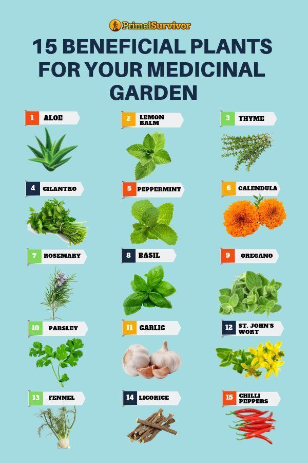 54 Square Foot Medicinal Garden Plan Medicinal Herbs Garden