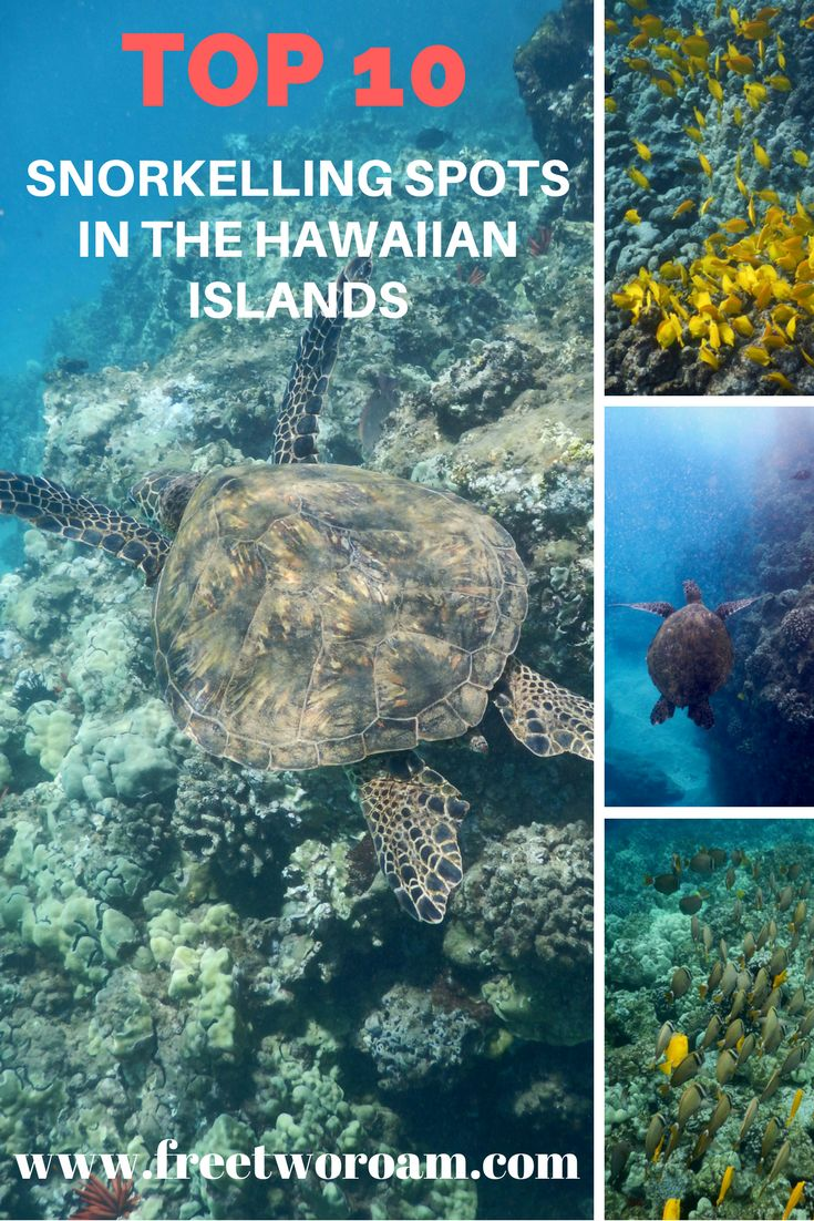Hawaii is not just about lying on the beautiful beaches. There is some awesome snorkelling to be done. Read about our favourite snorkelling spots so far.