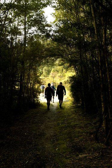 Kanuka forest trail