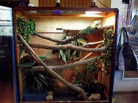 chinese water dragon terrariums