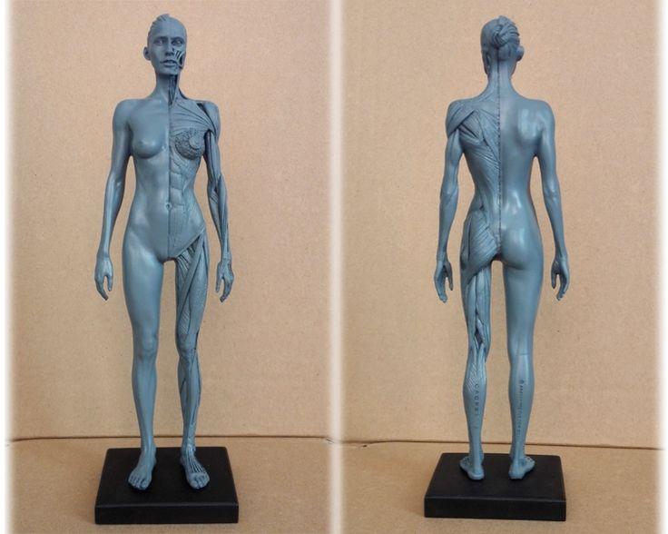 27.99$  Buy now - http://alikk4.shopchina.info/go.php?t=32623862084 - 30cm Human Female dental dentist ps4 Model Anatomy Skull Head Muscle Bone Medical Artist Drawing skeleton for sale  #aliexpresschina