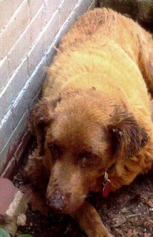 Crippled Dogs Adoption