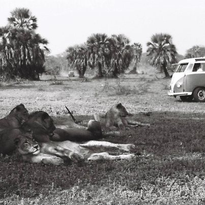 Gorongosa through History -Picture from the 60's:http://on.fb.me/UnLOAH(Photo from Jorge Ribeiro Lume archive)