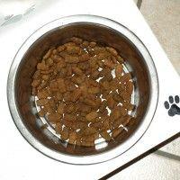 #dogalize Ciotole per cani: come devono essere, grandi o piccole? #dogs #cats #pets