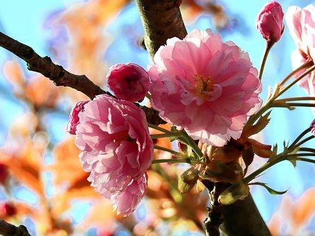 Kwiat, Drzewo, Wiosna, Charakter