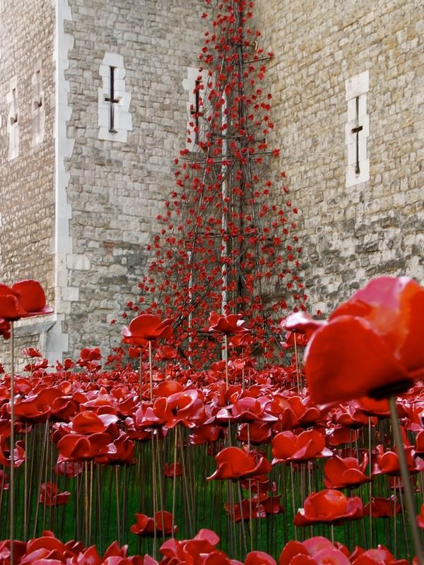 Ceramic Poppies at Tower of London 2014. The installation of over 888,000 red ceramic poppies was created by artist Paul Cummins, each poppy representing a British or colonial fatality during World War One.
