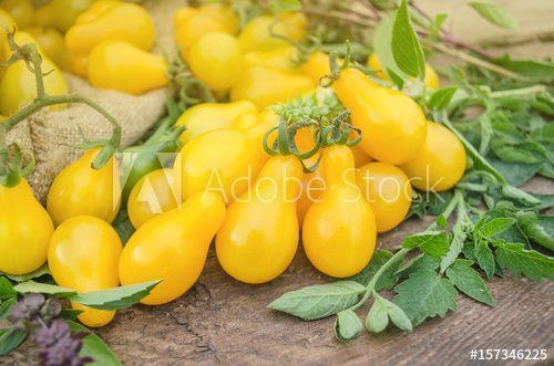 Yellow pear tomatoes. Healthy natural organic food