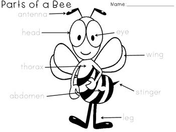 Great for introducing parts of a bee for an insect unit