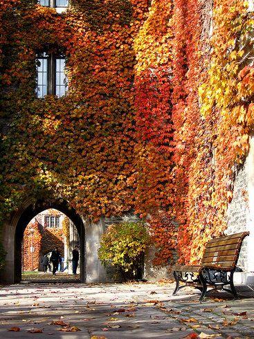 Ivy Portal, Toronto, CanadaCanada Canada, Favorite Places, Autumn Leaves, Autumn Ivy, Toronto Canada, Fall, Travel, Canada Colors, Ivy Portal