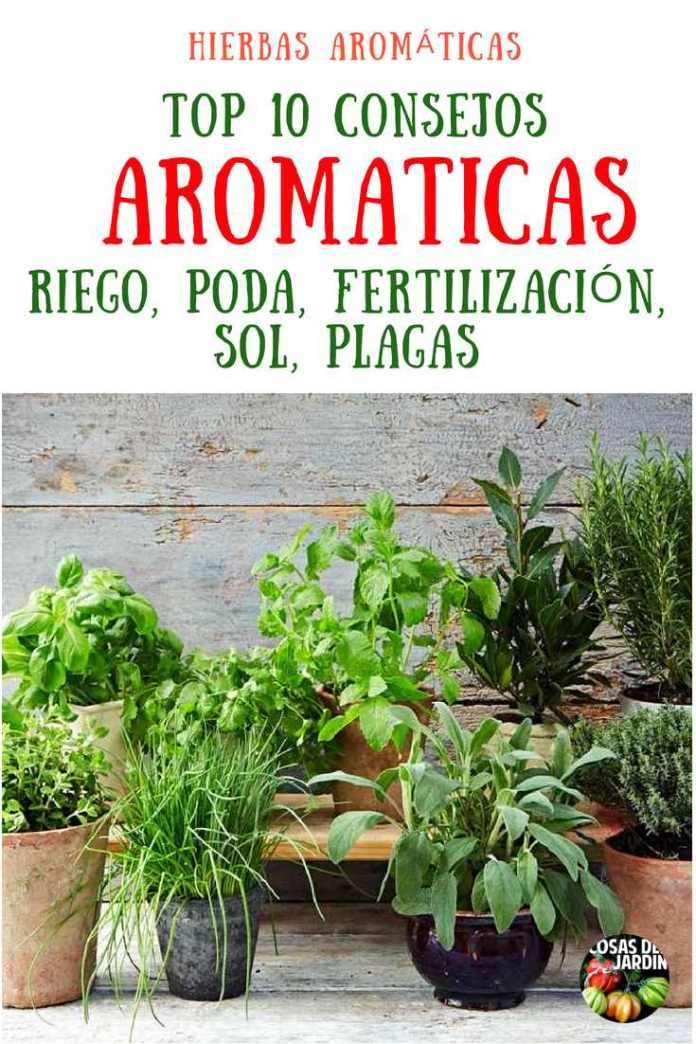 Organic Gardening Information Beautiful Soup, Beautiful Gardens, Container Gardening, Gardening Tips, Organic Gardening, Gardening Books, Flower Pot Design, Water Plants, Garden Projects