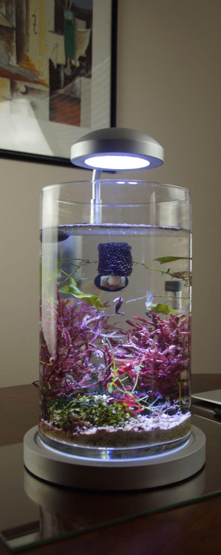 PJ reefs 2.0 Dwarf Seahorse Aquarium Now LIVE on Kickstarter