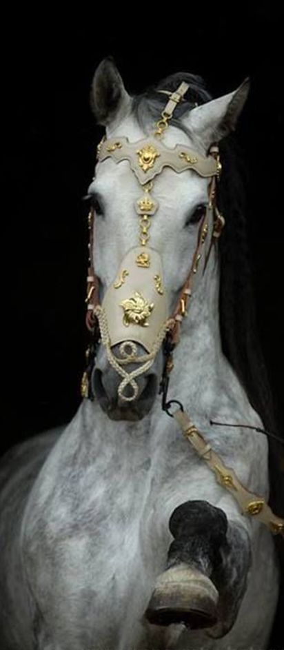 Kingdom:  A #horse of the #Kingdom.