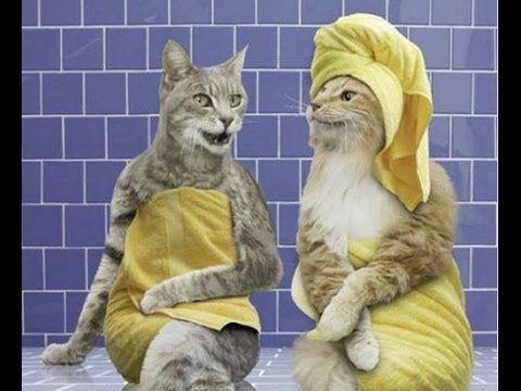 Смешные животные 2 ● Приколы 2014. Кошки, собаки и другие ● Funny animal...