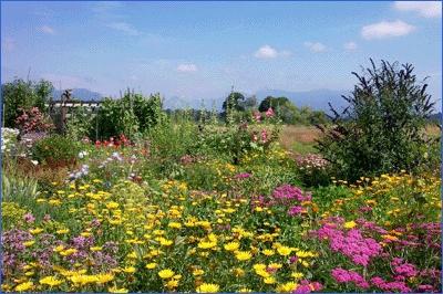 Colony Farm Regional Park - Coquitlam