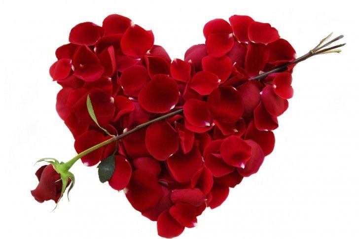 Valentine'S Day Rose Cupid Arrow
