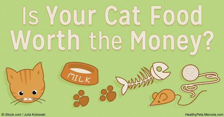 The best quality food you can offer your cat doesn't come in a can or a bag from pet food store, but in a nutritionally balanced food from your own kitchen. http://healthypets.mercola.com/sites/healthypets/archive/2016/04/25/good-quality-cat-food.aspx