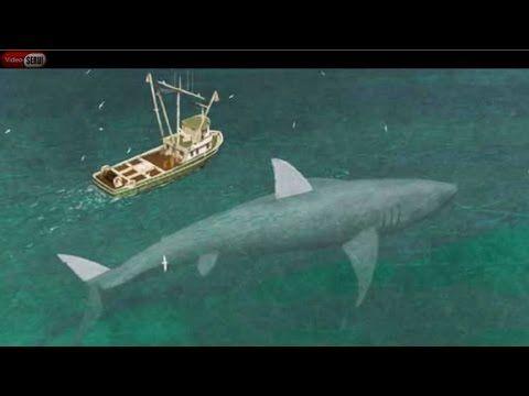 Ikan terbesar di seluruh dunia NYATA terekam kamera amatir