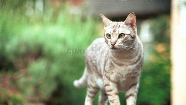 H παρέα του Επταπυργίου : Γάτα, το ζώο σύμβολο καθαριότητας