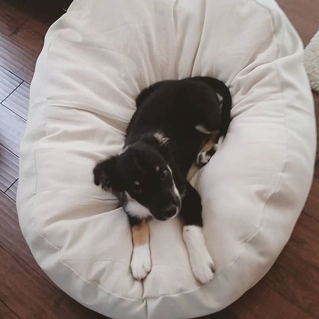 Easy DIY Dog Bed from painters drop cloth and old pillows