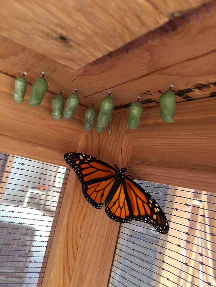 Building a butterfly habitat annas garden home