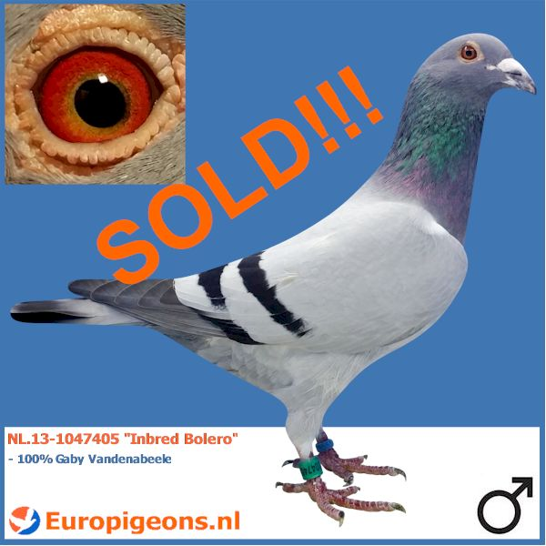 SOLD TO THE UNITED KINGDOM!!! Jonathan good luck with this fantastic bird!