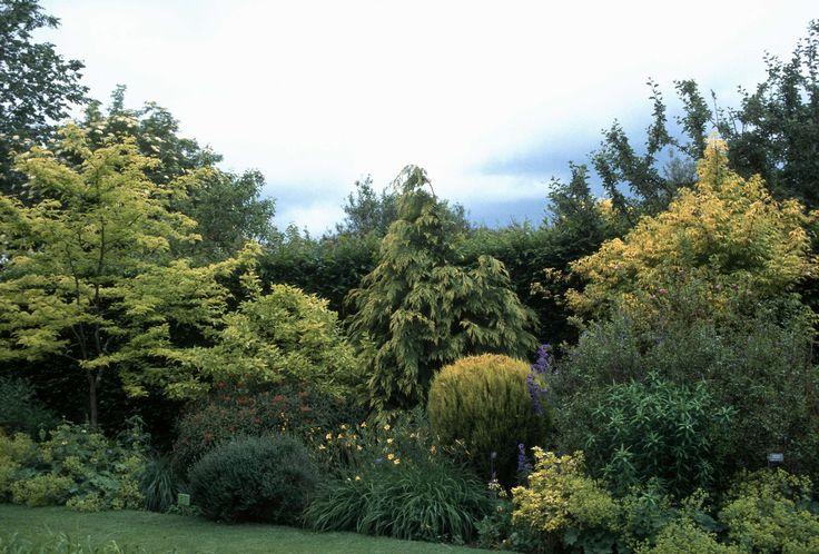 Gleditzia [triacanthos] : sunburst [honey locust], Alchemilla mollis, Sambucus, Thuja [orientalis?] : Berkman's gold, Choisya ternata, Hemerocallis : Pinnochio - City of Vancouver Archives