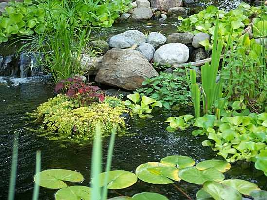 14 best images about pond ideas on pinterest gardens for Best garden ponds