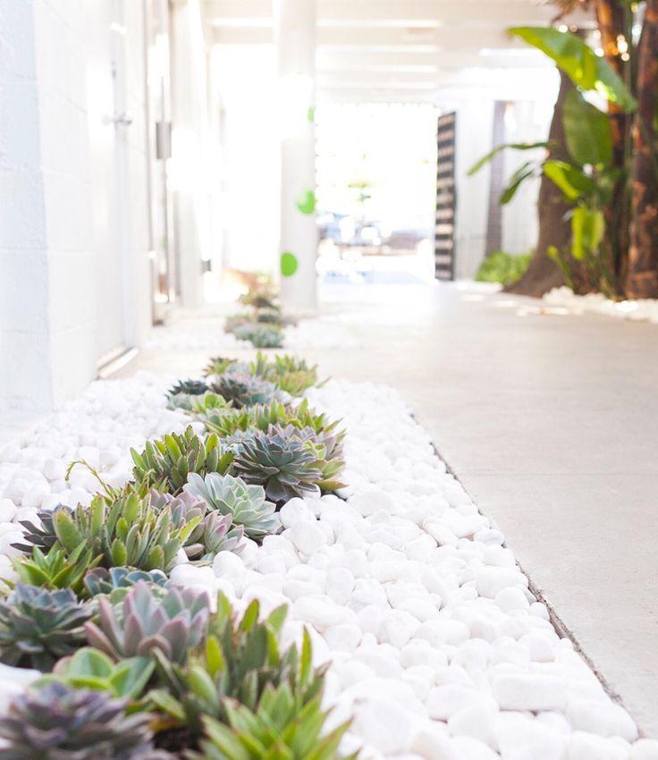 Cute little succulents