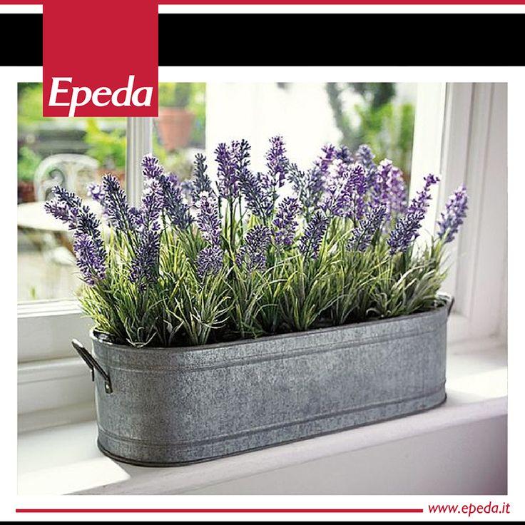 8 migliori immagini 6 piante da mettere in camera da letto - Piante in camera ...