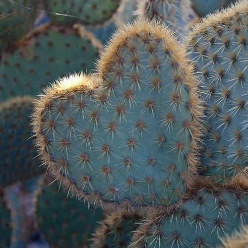 Cacti Love :)