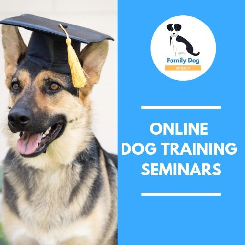 Take A Deep Dive Into The Dog Training Topics That Interest You