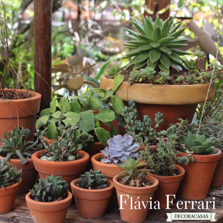 Arranjos de plantas suculentas, para trazer um pouco de verde à sua casa, sem muito trabalho.