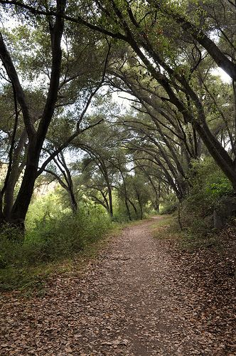 Santa Margarita River Trail/ Fallbrook, CA ~ Scooter and I have hiked these trails over and over.