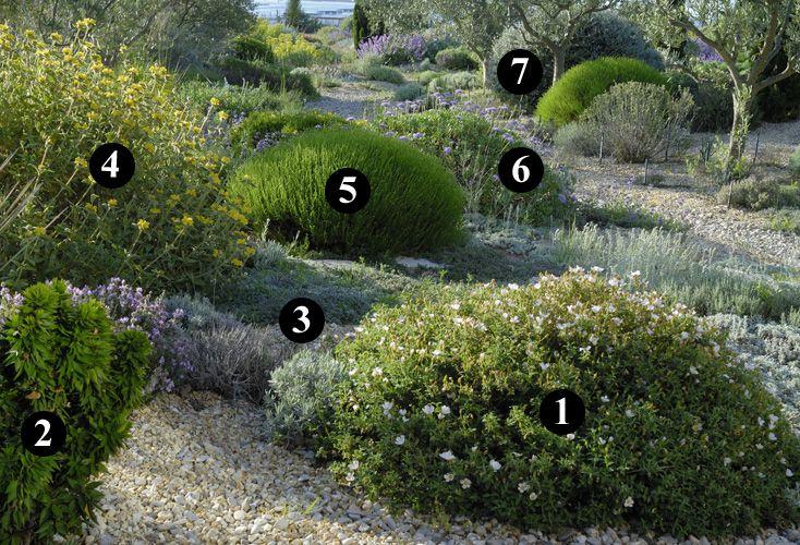 1 : Cistus x pauranthus 'Natacha'  2 : Myrtus communis 'Baetica'  3 : Thymus ciliatus  4 : Phlomis lycia  5 : Santolina viridis 'Primrose Gem'  6 : Lomelosia cretica  7 : Teucrium fruticans