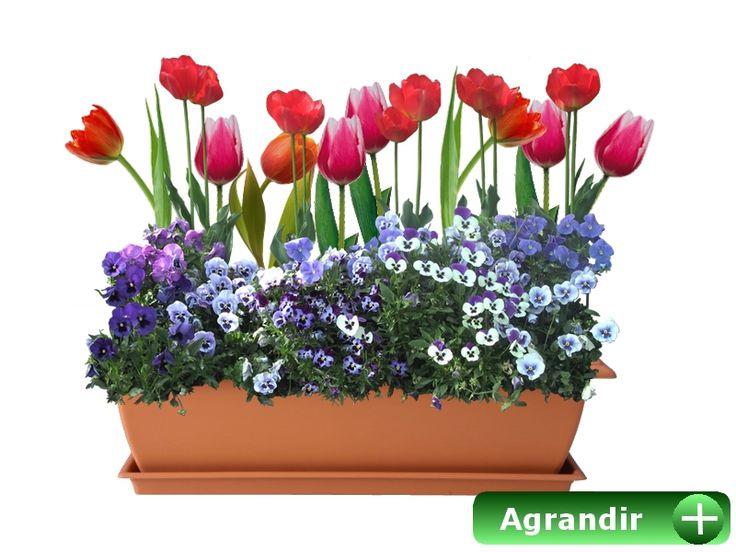 Les 17 meilleures id es de la cat gorie planter des - Planter des tulipes en mars ...