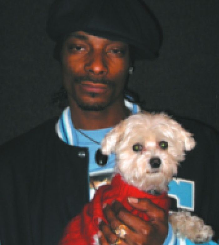 Snoop Dogg's obsession with canines, is one of the most benign aspects of his life, with him owning a few small family dogs that his wife Shante Broadus and kids love