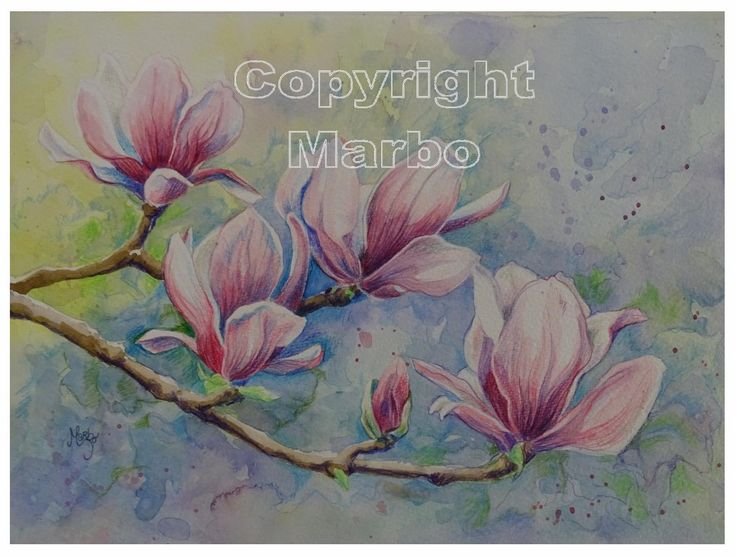 Mixed Media (Aquarel en Faber Castell Polychromos) Magnolia nr. 3 gemaakt door Marbo in april 2016