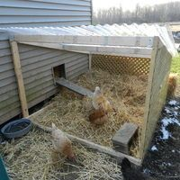 """They partitioned off part of the run and made a winter """"solarium"""". Gets them outside, still helps protect from the elements"""