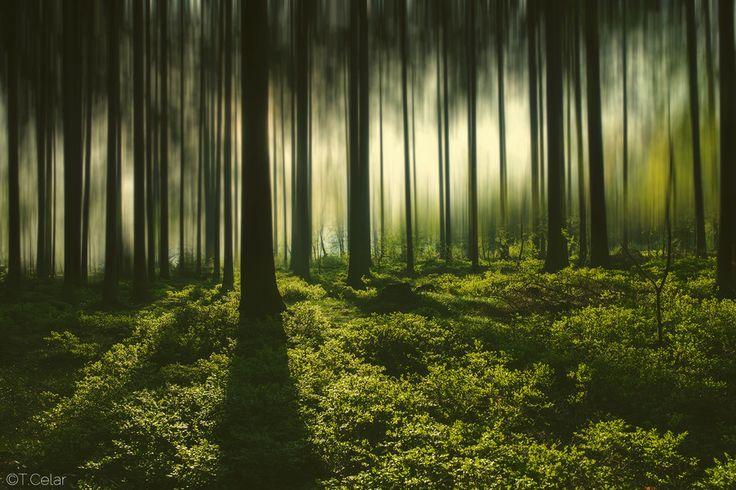 Photo Fairyland by Tomáš Celar on 500px