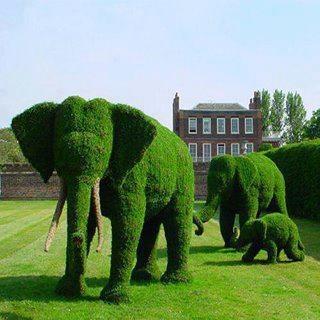 Green elephants. If you love gardening please visit us on Facebook: https://www.facebook.com/GreenDreamsLandscape