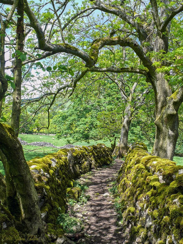 Track near Starbotton, Wharfedale, Yorkshire Dales, England ✯ ωнιмѕу ѕαη∂у