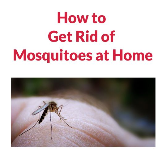 how to get rid of mosquitoes in your house