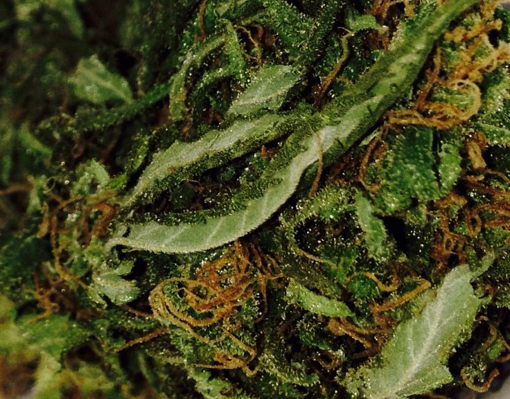 Weed stoner thc