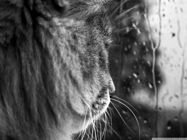 Pin by Jill Johnson on Rain Drops Cats, Wallpaper, Cat face